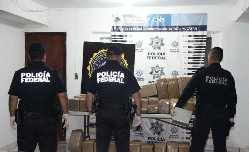 La fuerzas federales y estatales han participado en diversos operativos, en los que se ha decomisado droga dentro de territorio yucateco. (Milenio Novedades)
