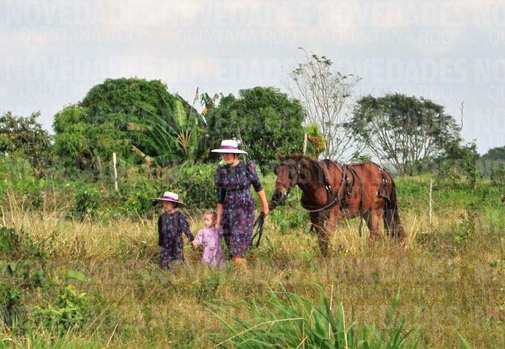 El grupo solicitó permiso para utilizar 900 hectáreas para sus cultivos, pero lleva más de cinco mil. (Javier Ortíz/SIPSE)