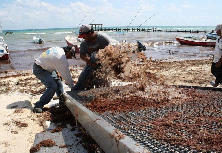 La máquina recogedora de sargazo fue probada nuevamente en Playa del Carmen el jueves. (Octavio Martínez/SIPSE)
