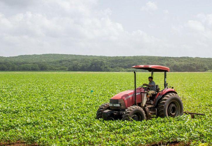 Esperan que los productores desarrollen proyectos en el campo. (Joel Zamora/SIPSE)