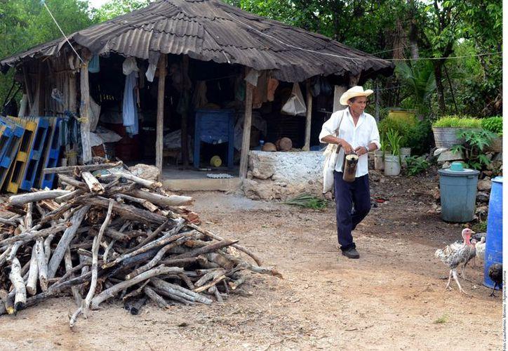 Se observa un desplazamiento de la agricultura hacia el sector terciario de la economía. (Agencia Reforma)