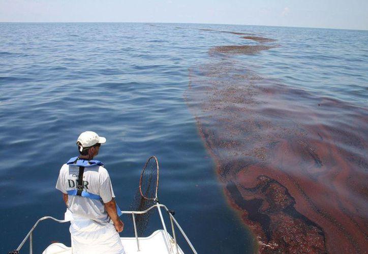 Los pescadores afectados aseguraron que el crudo llegó hasta aguas mexicanas por medio de corrientes profundas. La imagen cumple funciones estrictamente referenciales. (ocean.si.edu)