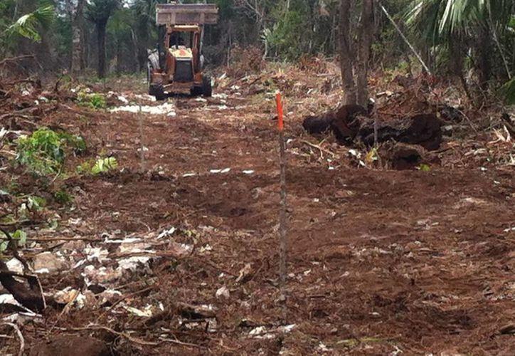 El desmonte es más que evidente, lo mismo que el daño a la ecología. (Octavio Martínez/SIPSE)