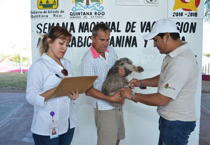 Se implementó la estrategia 'Dueños responsables de sus mascotas', programa que también realizó 658 esterilizaciones. (Joel Zamora/SIPSE)