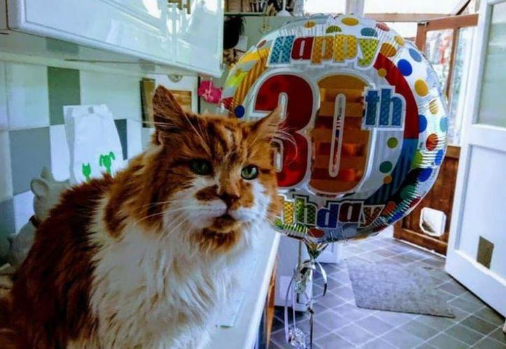 El gatito fue adoptado cuando tenía apenas unos meses por Michele Heritage. (Twitter)