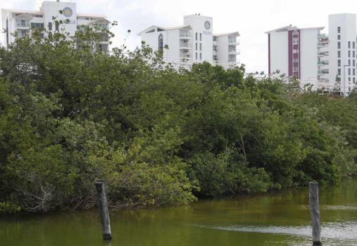 Los manglares fueron afectados por obras del desarrollo de Cancún. (Archivo/SIPSE)
