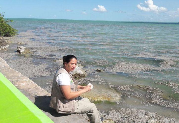 Personal de la PPA recopiló muestras del agua y de la espuma flotante para llevarlas al laboratorio y posteriormente emitir un reporte. (Eddy Bonilla/SIPSE)