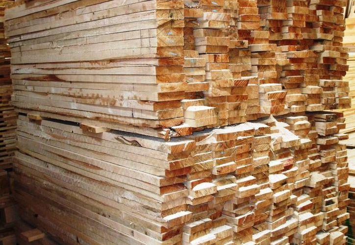 El Estado ocupa el primer lugar en la generación de maderas tropicales con un volumen al año de 45 mil metros cúbicos. (Redacción/SIPSE)