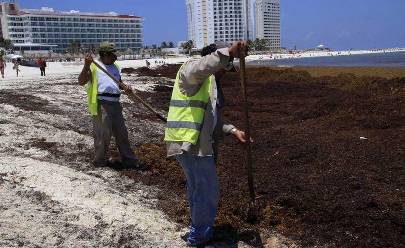 Empleados del Ayuntamiento limpian las playas. (Tomás Álvarez/SIPSE)