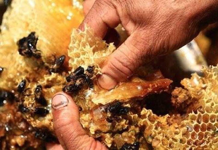 Este año se pretende certificar a 35 productores de miel en el Estado. (Contexto/Internet)