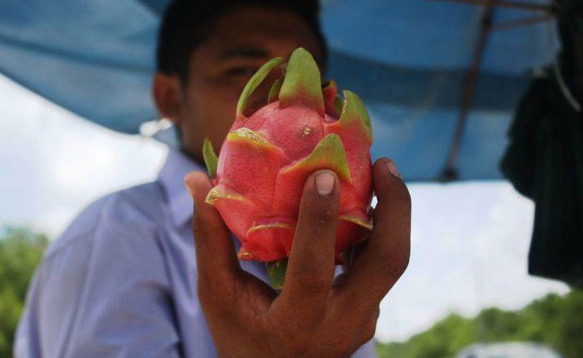 Jonatán ayuda a la economía de su familia con la venta de pitahaya y otras frutas. (Octavio Martínez/SIPSE)