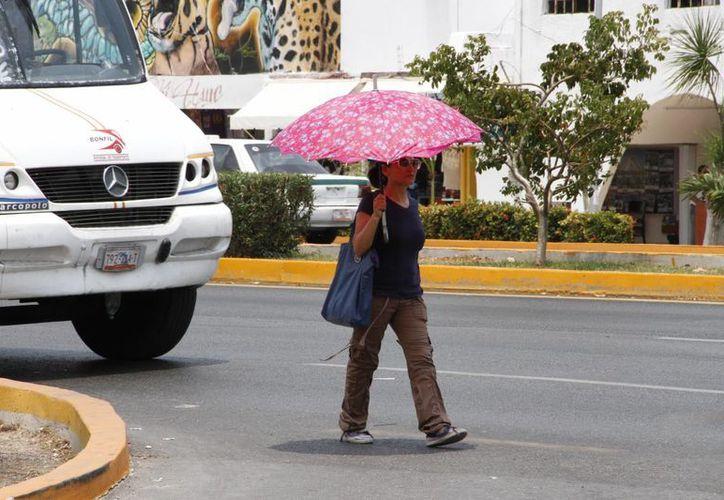 Deben evitar exponerse al sol por largos períodos. (Tomás Álvarez/SIPSE)