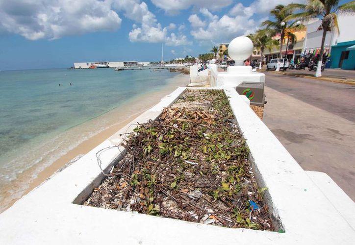 Algunas de las jardineras son utilizadas como depositos de  basura. (Gustavo Villegas/SIPSE)