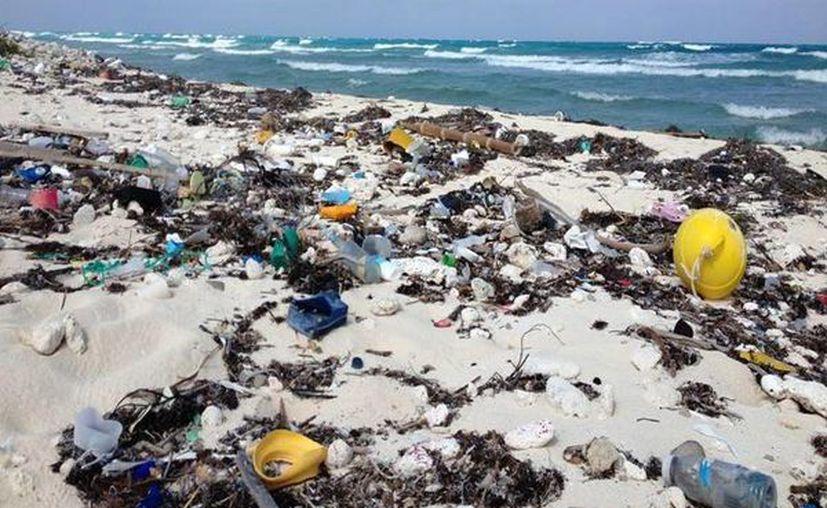 El pronóstico es recolectar 7.5 toneladas de basura como mínimo, en la primera fase. (Harold Alcocer/SIPSE)