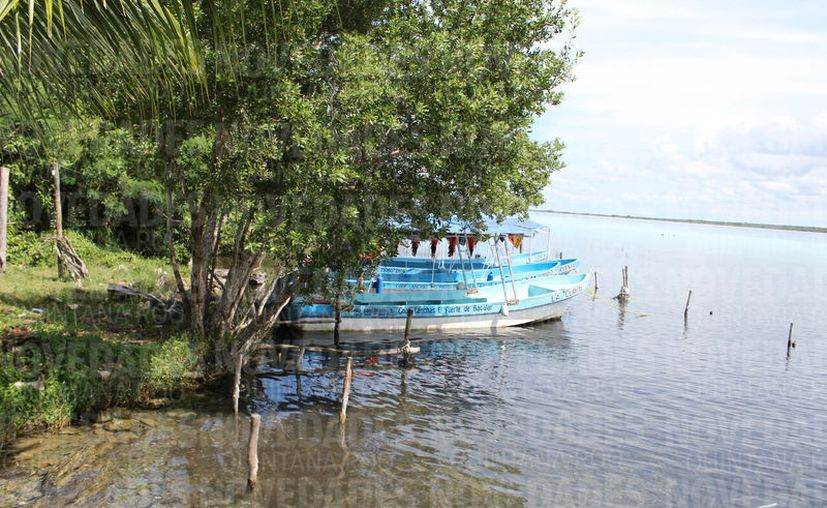 Asociaciones ambientalistas están sumando esfuerzos para lograrlo (Foto: Joel Zamora/SIPSE).