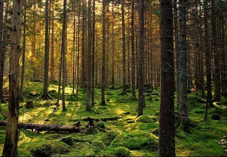 El pequeño fue dejando en el bosque como 'castigo'. (Internet)