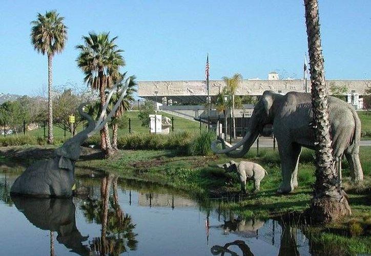 En Miracle Mile está el Rancho La Brea, donde fueron encontrados esqueletos de dinosaurios atrapados en sus fosos. (Facebook/Page Museum at the La Brea Tar Pits)