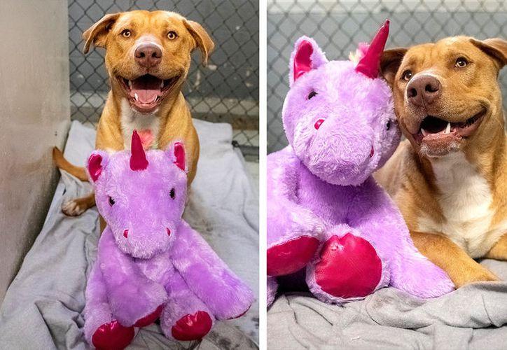 """Adoptan a """"Sisu"""", el perro callejero que se robó 5 veces un unicornio de  peluche"""