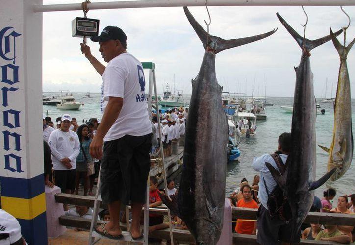 Los torneos de pesca de Quintana Roo son avalados por la Federación Nacional. (Archivo/SIPSE)