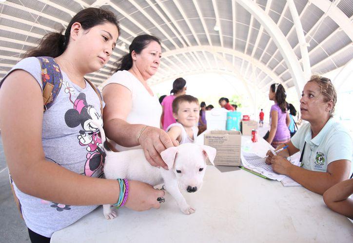 Entrega Cebiam más de 150 perros  y gatos en adopción durante 2017. (Redacción/SIPSE)