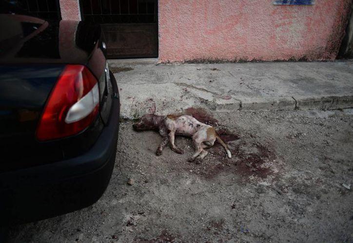 La muerte de dos perros en una calle del fraccionamiento Juan Pablo II-Nora Quintana se saldó finalmente con el pago de 30 mil pesos, que deberá hacerse efectivo a más tardar el 28 de diciembre. (Milenio Novedades)