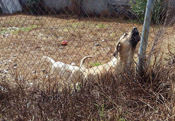 El Estado que con mayor dureza castiga el maltrato animal es Coahuila. (Notimex)