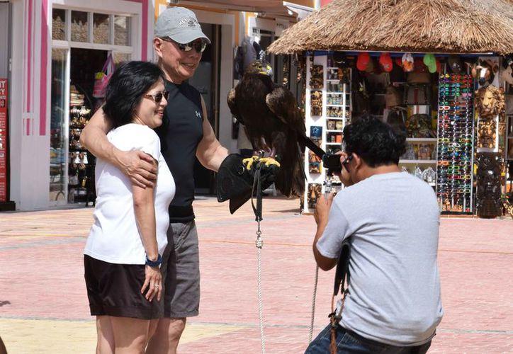 Turistas y gente local se acercan a tomarse la foto con el ave, cuya especie pesa de 3.5 a 6 kilogramos y mide de .9 a un metro de altura. Su envergadura es de 1.82 a 2.27 metros, de punta a punta de las alas.  (Gustavo Villegas/SIPSE)