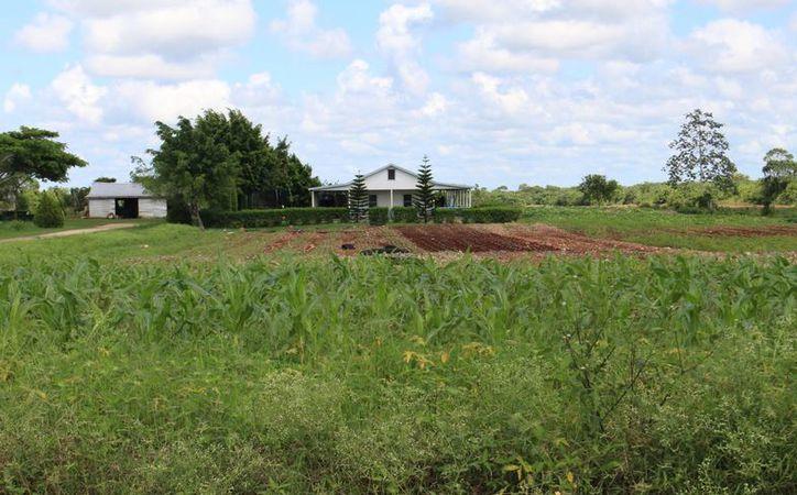 La Unión Campesina Democrática desaprueba el uso de semillas genéticamente modificadas en varios países, entre los que destaca Quintana Roo. (Ángel Castilla/SIPSE)