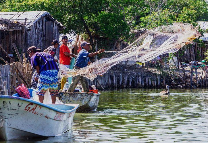 Los pescadores recibirán la ayuda por afectaciones durante las vedas. (Milenio Novedades)