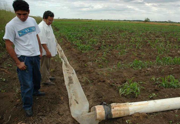 Los sistemas de riego presentan varias deficiencias, ya se planea la rehabilitación de ocho sistemas de riego y la creación de cuatro pozos más para abarcar 400 hectáreas de sorgo. (Edgardo Rodríguez/SIPSE)