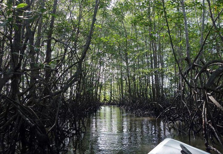 La vegetación costera es la clave contra huracanes, por lo que se tiene que impulsar su conservación, afirma un experto.  (Foto: Milenio Novedades)