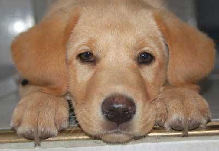 Exhortan a llevar periódicamente a las mascotas a un veterinario. (Cortesía/Internet)