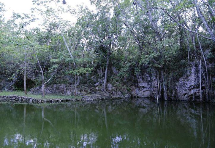Autorizan recursos para el programa de sanidad forestal en la entidad. (Jesús Tijerina/SIPSE)