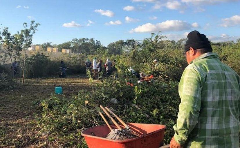 Los dueños son avisados y en caso de no proceder a la limpieza, el municipio lo hará con algún costo. (Octavio Martínez/SIPSE)