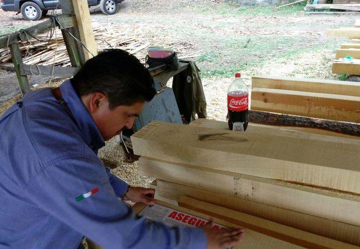 La Profepa clausuró actividades en bodegas clandestinas de madera ubicadas en seis Áreas Naturales Protegidas en el sureste de México, incluyendo una en Yucatán, en la reserva de la biosfera Ría Lagartos. (Notimex)