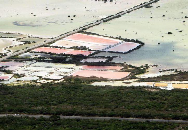 Una de las instrucciones de Profepa es dar continuidad y seguimiento al Programa de Ordenamiento Ecológico del Territorio Costero del Estado de Yucatán. (Milenio Novedades)