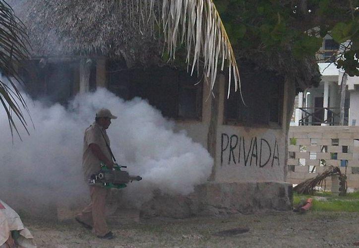 Urgen a las labores de prevención ante la molestia sanitaria que prolifera en algunos poblados rurales. (Javier Ortiz/SIPSE)