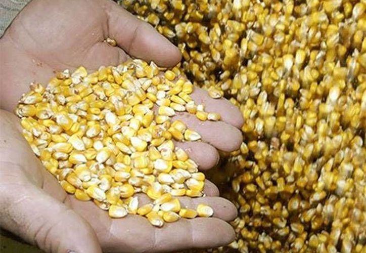 Los creador de la desgranadora pretenden que los agricultores en crecimiento tengan la posibilidad de adquirir una máquina a un costo accesible. (excelsior.com.mx)