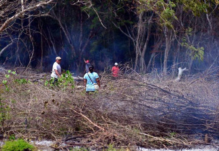 Los invasores deforestaron 11 hectáreas de selva baja. (Milenio Novedades)