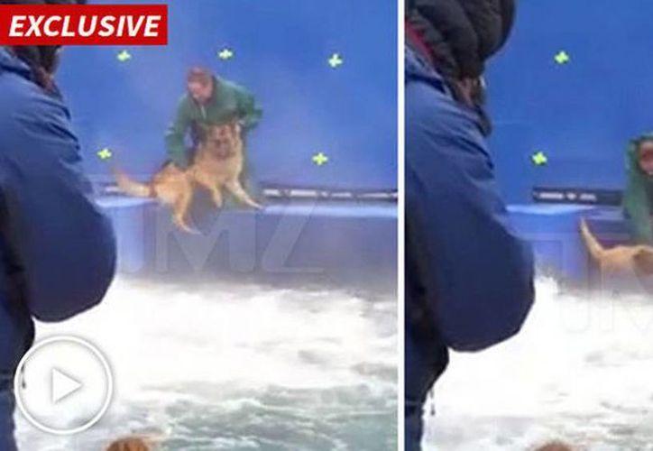 En el video se ve al perro que se resiste entrar al agua y sufre un ataque de pánico. (Captura de pantalla/TMZ)