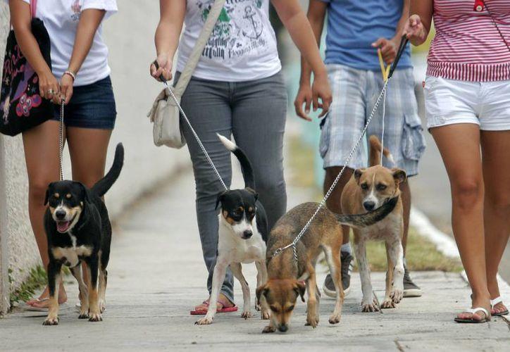"""Caminemos Juntos """"Chiquis"""" promueve campañas de esterilización masiva. (Harold Alcocer/SIPSE)"""