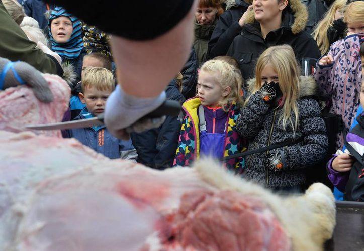 El zoológico de Odense diseccionó ante el público un león sacrificado hace meses, pese a una campaña internacional en contra. (Agencias)
