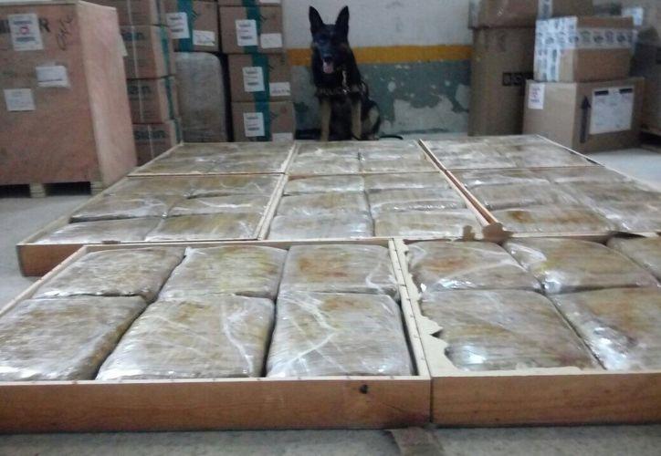 """Una perra, de nombre """"Linda"""", encontró 75 kilos de droga en una empresa de paquetería, en Mérida. Iban con destino a Cancún. (SSP)"""