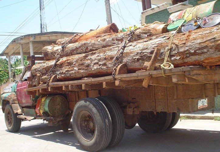 """El """"oro verde"""" ya no es prioridad para los contrabandistas, aseguran. (Carlos Yabur/SIPSE)"""