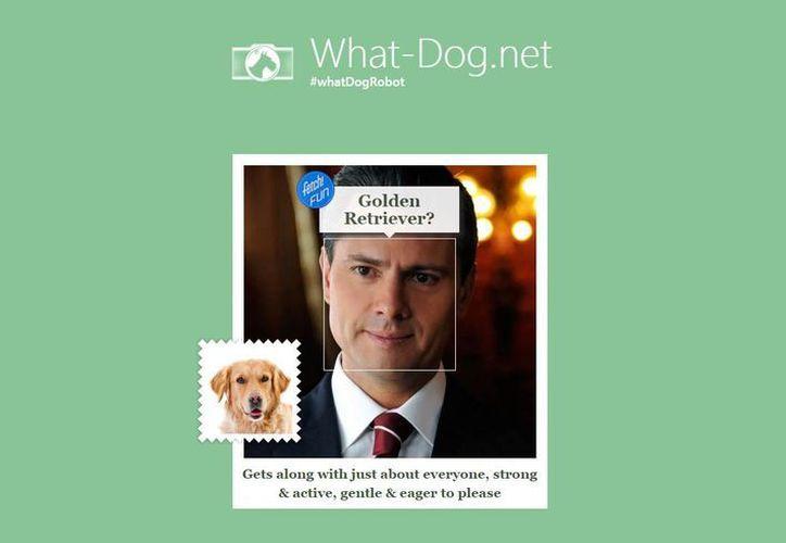 Para saberlo solo debes seleccionar una foto en la que aparezcas de frente o ligeramente de perfil y la aplicación hará el resto. (what-dog.net)