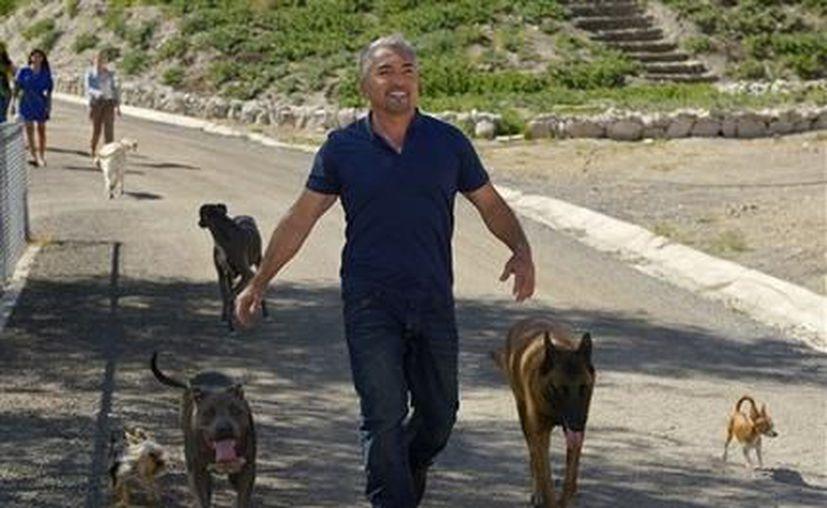 César Millán camina con sus perros en su centro de atención psicológica canina en Santa Clarita, California. (Agencias)