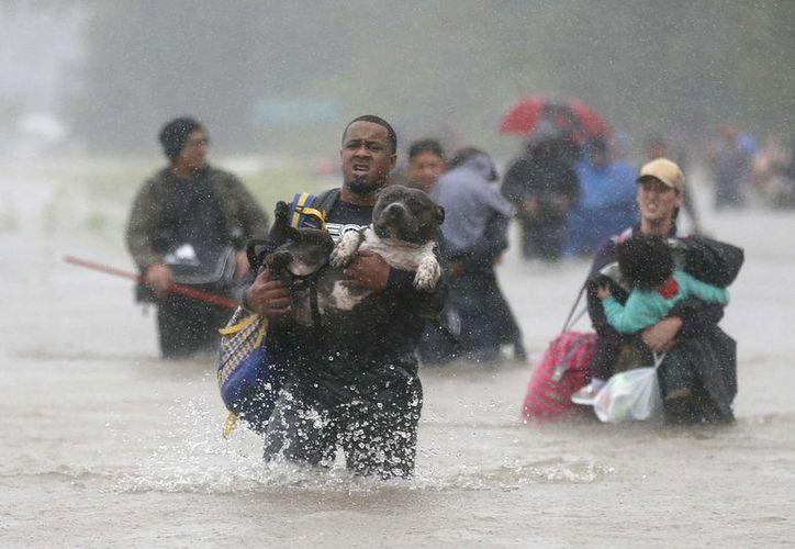 En San Antonio, recogieron a unos 200 animales abandonados. (Reuters).