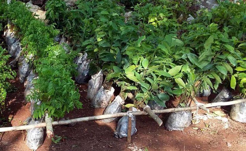 La Reserva Toh se ubicada en la Ruta de los Cenotes. (Cortesía/SIPSE)