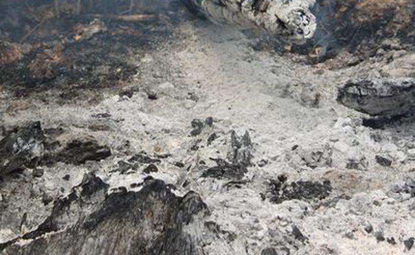 La rosa, tumba y quema, así como el 'chapeo' con fuego, son las principales causas de incendios forestales. (Ángel Castilla/SIPSE)