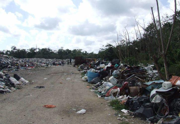 Quienes tienen viviendas o parcelas en los alrededores del basurero municipal añoran un relleno sanitario.  (Rossy López/SIPSE)